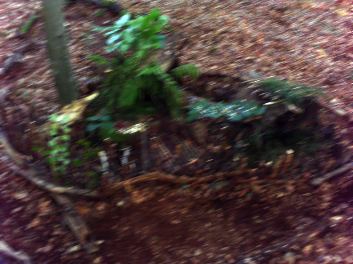 Waldwichtel 02