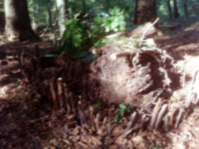 Waldwichtel 03
